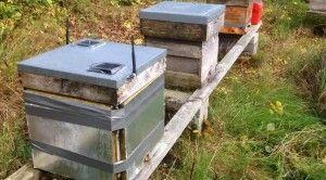 Waspmote Smart Beehives